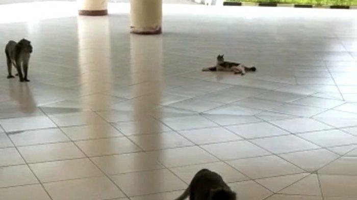 Tak Ada Aktivitas Mahasiswa, Kampus IPB University Didatangi Kawanan Monyet