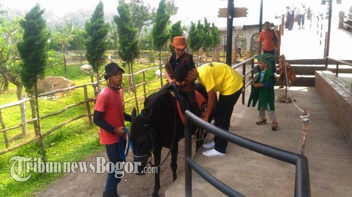 Berkuda di The Ranch, Puncak, Kabupaten Bogor