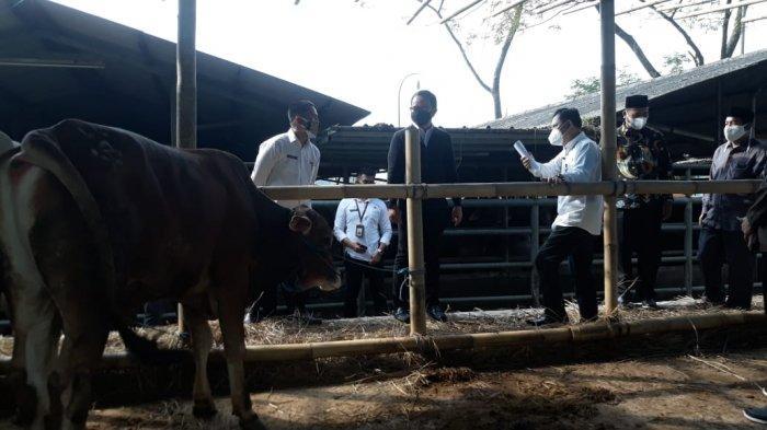 Jelang Idul Adha 2021, Wali Kota Bima Arya Tinjau Kesiapan RPH Bubulak