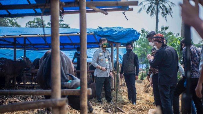 Jelang Idul Adha, Mentan dan Wali Kota Pantau Ketersediaan Hewan Kurban di Kota Bogor