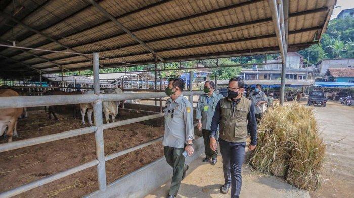 Wali Kota Bogor Bima Arya mendampingi Menteri Pertanian Syahrul Yasin Limpo (SYL) memantau ketersediaan hewan kurban hingga meninjau kesiapan Rumah Potong Hewan (RPH) di Kota Bogor, Kamis (15/7/2021).
