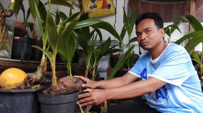 Ketua RT di Mekarwangi, Sulap Kelapa Jadi Bonsai Tanaman Hias