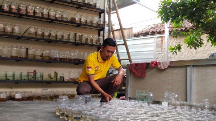 Budidaya Ikan Cupang Avatar Gold Dan Blue Rim Pria Asal Bogor Raup Untung Jutaan Rupiah Tribunnews Bogor