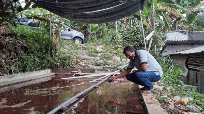 Tren Ikan Cupang, Budidaya Cacing Sutra Mulai Dilirik