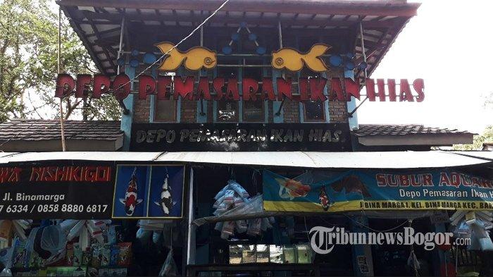 Pusat Ikan Hias Di Kota Bogor Ini Sering Didatangi Mahasiswa, Ternyata Untuk Lakukan Ini