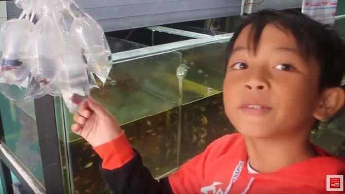 Gara Gara Beli Ikan Cupang Diwan Bocah 9 Tahun Ini Jadi Trending Nomor 1 Rajai Youtube Tribunnews Bogor