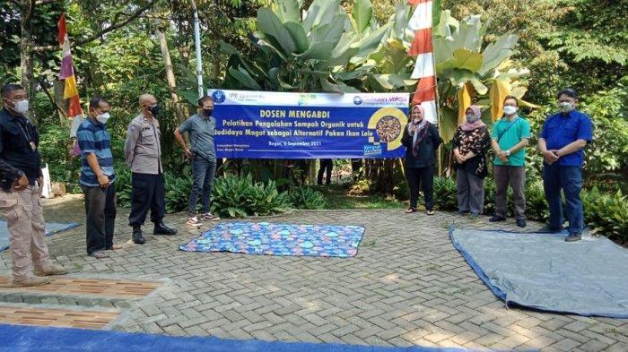 Trik Jitu Dosen IPB University Cara Budidaya Maggot untuk Pakan Alternatif Ikan Lele