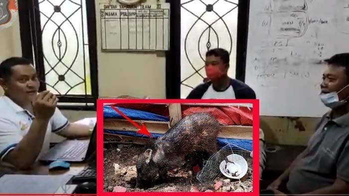 Tak Bisa Buktikan Babi Ngepet Jelmaan Manusia,Warga Depok Minta Maaf Depan Polisi: Sudah Fitnah Babi