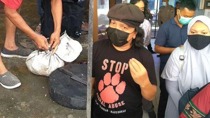 Jagal Kucing di Kalideres Ngaku Salah Sasaran, Beda Kejadian di Medan Pemilik 'Tayo' Sampai Diteror