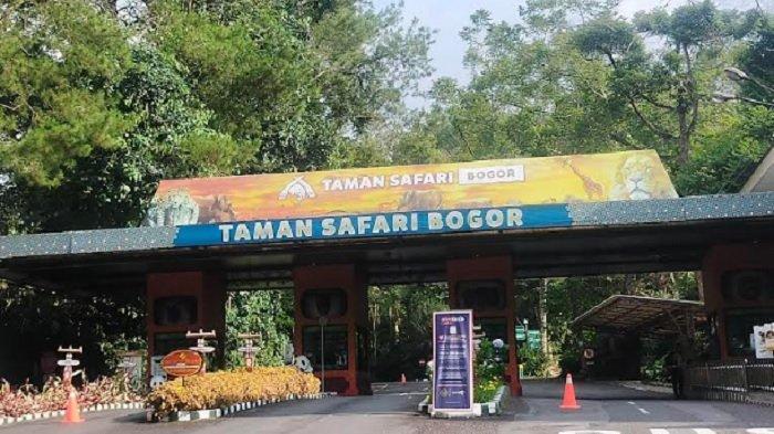 Kunjungan Wisatawan ke Taman Safari Cisarua Bogor Baru Mencapai 40 persen