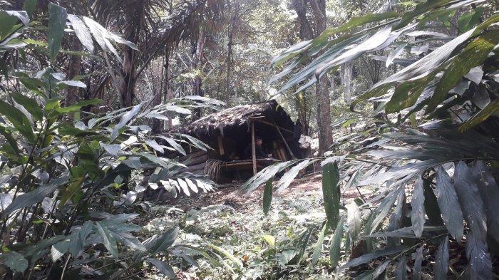 Kisah Kakek Nali Pengrajin Gula Aren Asal Rumpin Bogor, Berjuang di Dalam Gubuk Seorang Diri