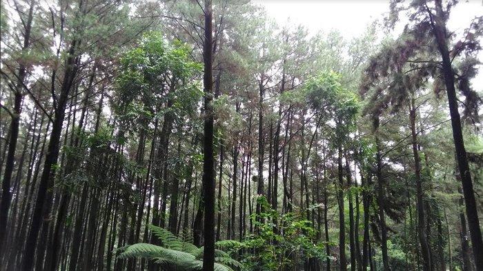 Niat Liburan ke Pemandian Dwi Warna, 5 Orang Dilaporkann Hilang di Hutan Sibolangit