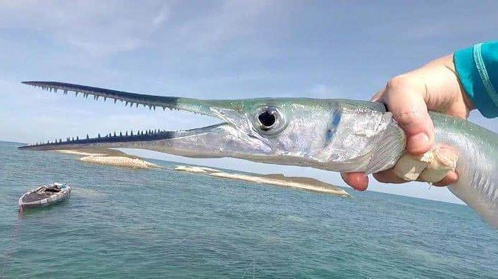 Arti Mimpi Melihat Ikan Mati, Waspada Jadi Pertanda Buruk untuk Usaha Anda