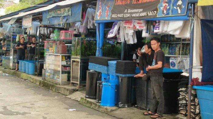 Khawatir Digusur karena Kabar Pembangunan Jalur LRT, Pedagang Ikan Hias Bogor 'Digocek' Pemkot