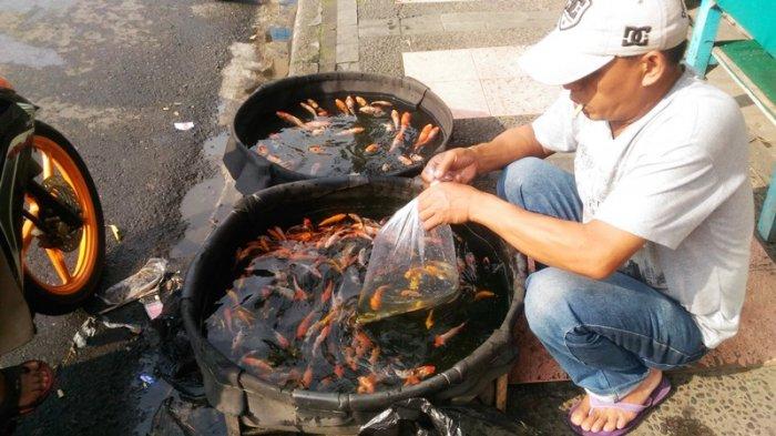 Ini Cara Memilih dan Merawat Ikan Hias Agar Tak Cepat Mati