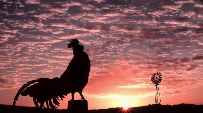 Jenis Keterampilan Taktik Bermain Ayam dan Elang, Kunci Jawaban Tema 2 Kelas 6 Halaman 95 dan 96