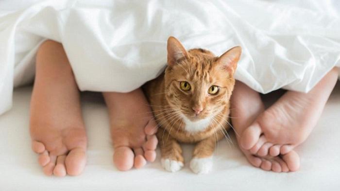 Kucing dan Anjing Dinyatakan Positif Covid-19, Ini Cara Agar Hewan Peliharaan Tak Tularkan Corona