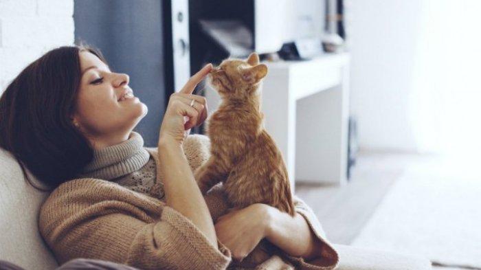Peliharaan Bisa Terinfeksi Covid-19, Benarkah Kucing Dapat Tularkan Virus Corona? Ini Penjelasannya