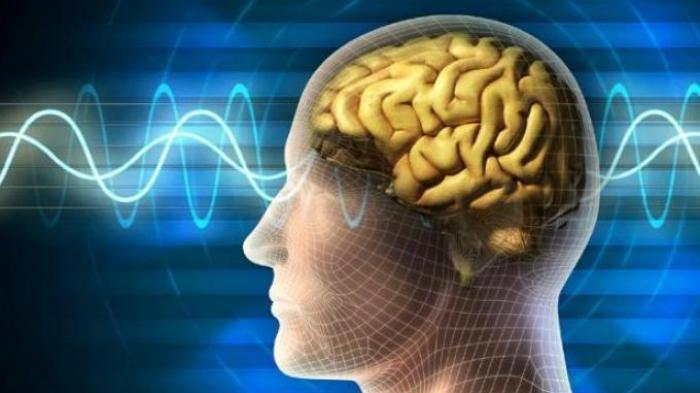 Tanpa Suplemen, Begini Cara Meningkatkan Fungsi Otak, Supaya Hidup Lebih Produktif!