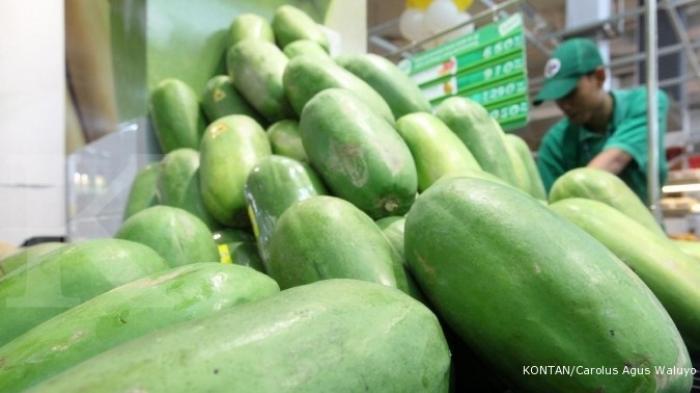 Praktisi Pusat Kajian Hortikultura Tropika IPB University Berikan Tips Budidaya Pepaya Callina