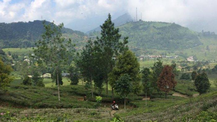 Soal Pembongkaran Vila Liar di Puncak, Wakil Bupati Bogor : Saya Gak Mau Pilih-Pilih