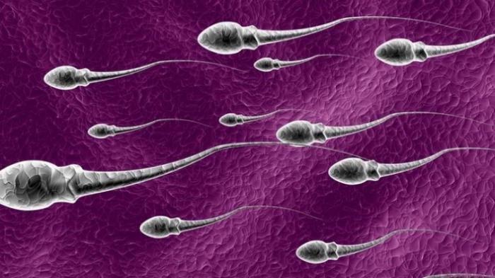8 Tips Memperbaiki Kualitas Sperma, Supaya Cepat Punya Momongan