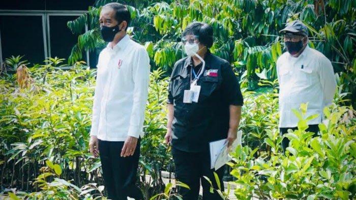 Kembangkan Green Economy, Jokowi Akan Jadikan Rumpin Sebagai Lokasi Pembibitan Nursery