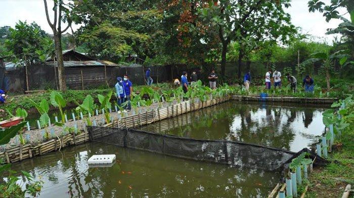 Berdayakan Anak Muda, Karang Taruna Katalang Ubah Lahan Tidur di kampung Bebek Jadi Kolam Ikan