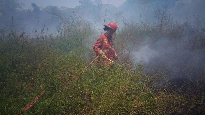 Sudah Sepekan Kebakaran Lahan Lebih dari 10 Hektare di Tanjungsari Bogor Belum Juga Padam