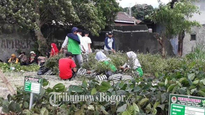 Kebun Bibit Hadir di Babakan Pasar Kota Bogor, Warga Bisa Belajar Tentang Pembibitan