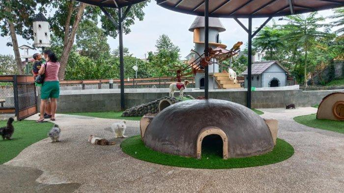 Kebun binatang Boxzoo di Boxies 123 Mall, Kota Bogor.