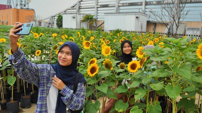 Menilik Kebun Bunga Matahari di Mal BTM Bogor, Tempatnya Instagramable Cocok Buat Foto-foto