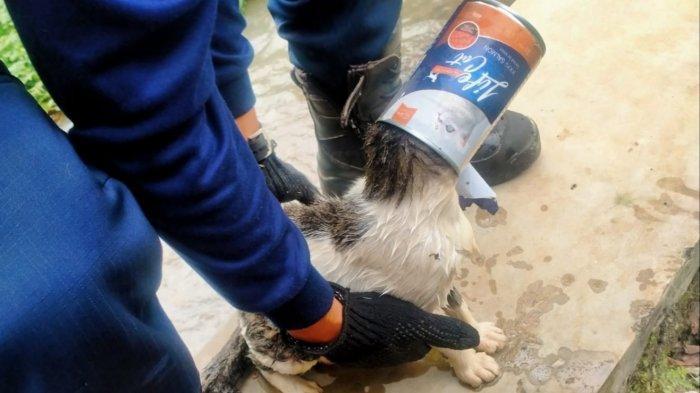 Kepala Kucing Ini Terjepit Kaleng Bekas, Damkar Kota Bogor Turun Tangan