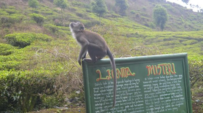 7 Tempat Wisata Kabupaten Bogor Yang Tawarkan Keindahan Alam dan Juga Mitos