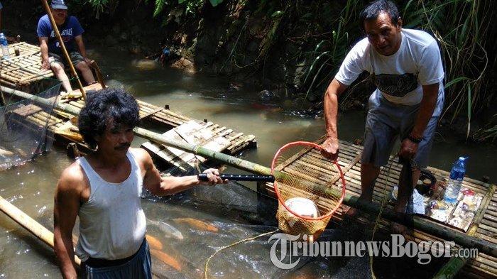 Manfaatkan Aliran Sungai, Warga Cimahpar Budidaya Ikan Mas di Keramba, Potensi Untung Ratusan Juta