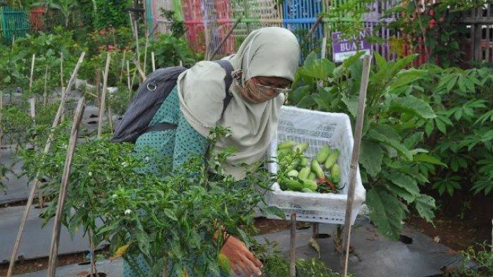Warga MBR Ubah Lahan Gunungan Sampah Jadi Sistem Pertanian Terintegrasi Kampung Ramah Lingkungan