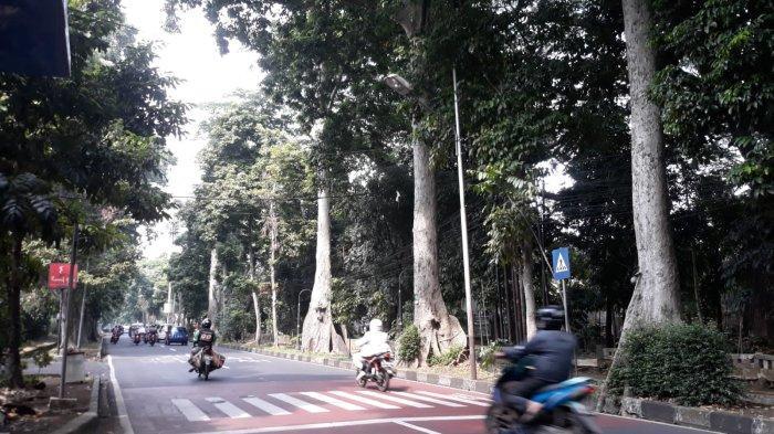 Disperumkim Kota Bogor Sebut Pohon yang Tumbang Tewaskan Pengendara ber-KTP Hijau
