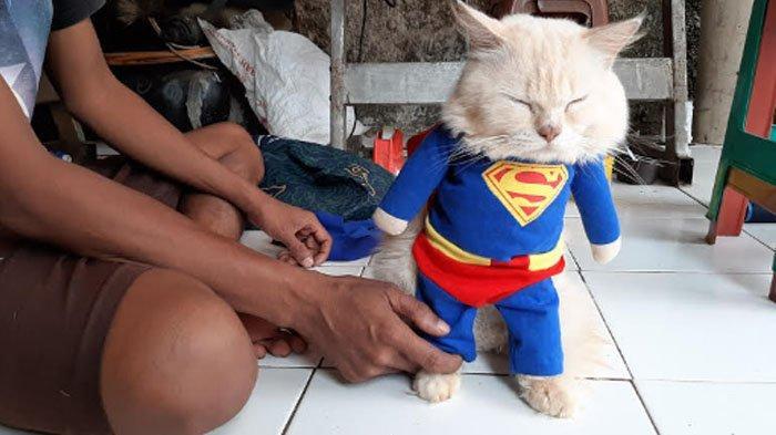 Konveksi pakaian hewan Fredi Lugina berlokasi di Kampung Jampang, Desa Jampang, Kemang, Kabupaten Bogor RT 03 RW 02.