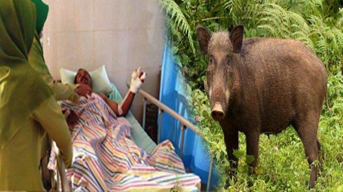 Cerita Rahmat Duel Dengan Babi Hutan Berbobot 1 Kwintal yang Bunuh Warsinah: Saya Bacok Tak Mempan