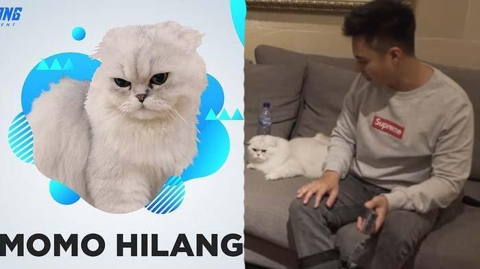 Kucing Paula Harga Puluhan Juta Hilang, Baim Wong Kaget Pencurinya Ternyata Bukan Sosok Asing