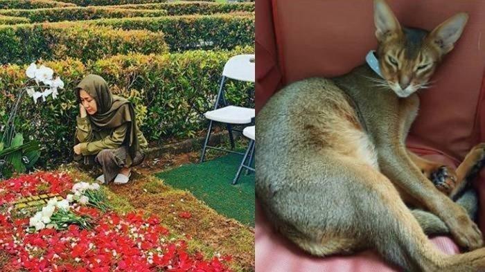 Kucing Kesayangan Ashraf Meninggal, Mertua BCL : Kamu Akan Senang Bersatu dengan Ayah