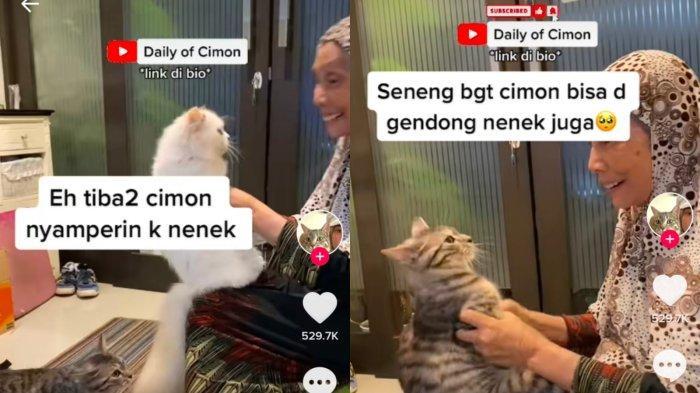 Viral Video Seorang Nenek Jadi Rebutan Para Kucing, Rela Antre Demi Dapat Pelukan