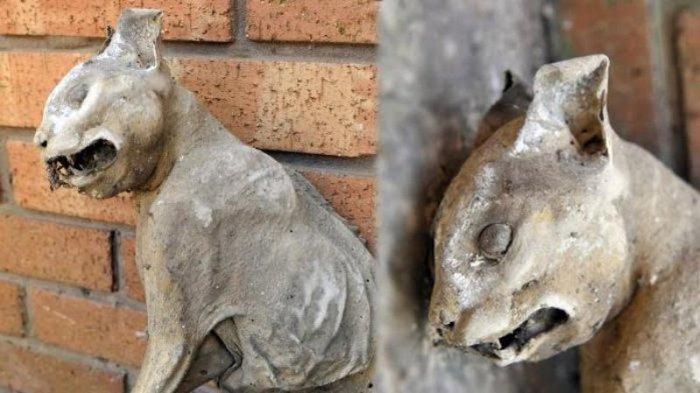 Pemilik Rumah Kaget Temukan Mahluk Ini di Atap Rumahnya, Kulitnya Keras Tubuhnya Masih Utuh