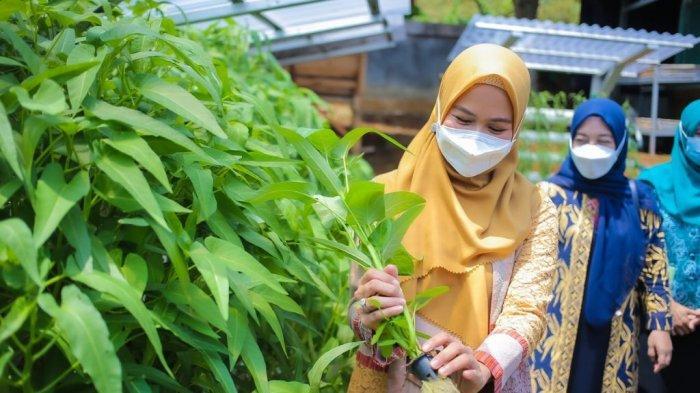 Ketua TP PKK Kota Bogor, Yane Ardian melakukan kunjungan ke Kelompok Wanita Tani (KWT) Kelurahan Bojongkerta, Kecamatan Bogor Selatan, Kota Bogor, Rabu (8/9/2021).
