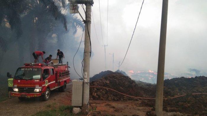 Kebakaran di kawasan Cigudeg, Lahan Kelapa Sawit Hangus Terbakar