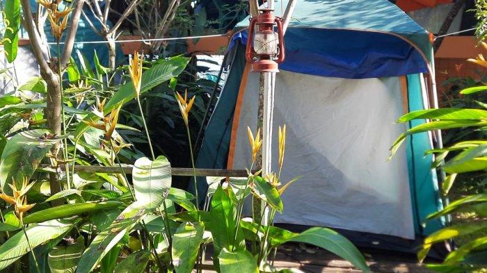 Berada di Ketinggian 1.030 Mdpl, Lembah Pinus Sukamakmur Jadi Wisata Baru Bagi yang Suka Camping
