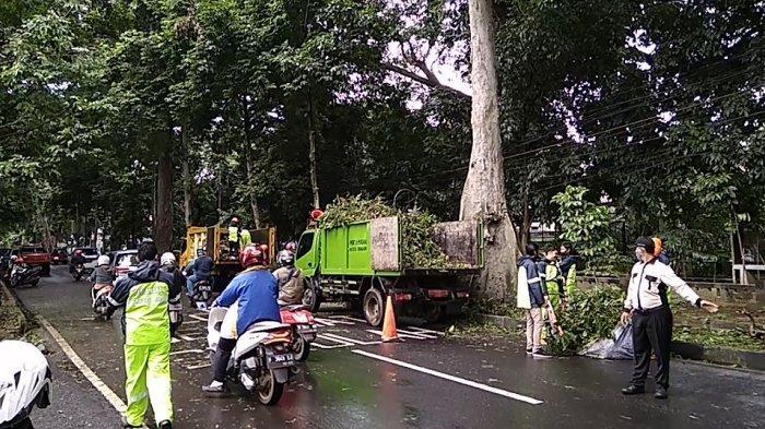 Bima Arya Sebut 4 Lokasi Ini Rawan Pohon Tumbang