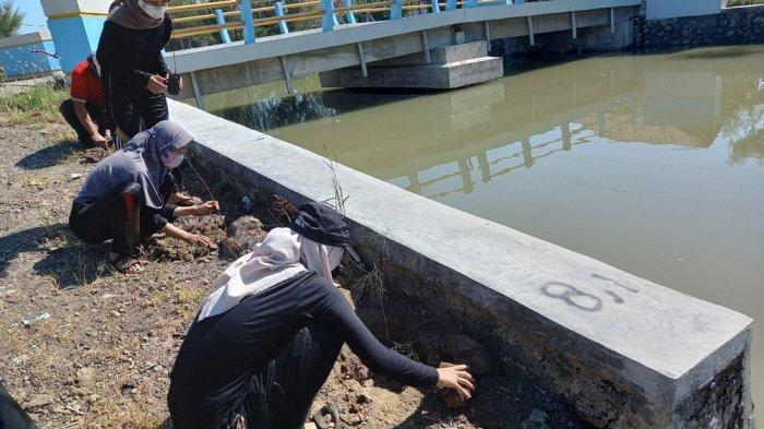 Peringati Hari Mangrove Sedunia, Kelompok KKN IPB Hijaukan Desa Bedono Demak