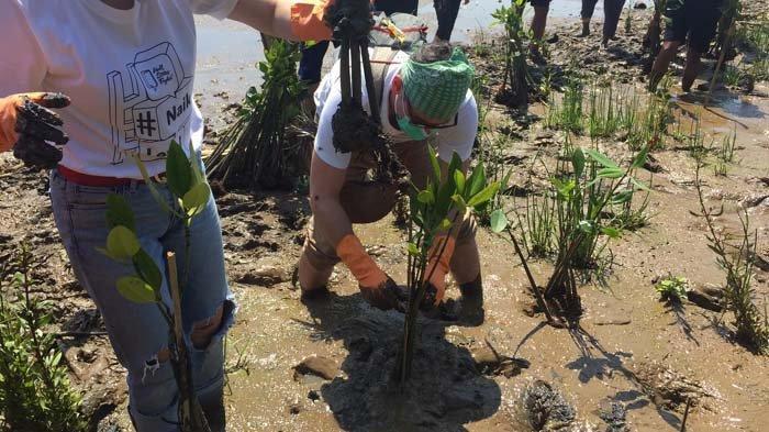 Peduli Alam, Komunitas Mangrove Jakarta dan Wall Street English Tanam Mangrove di Tanjung Burung