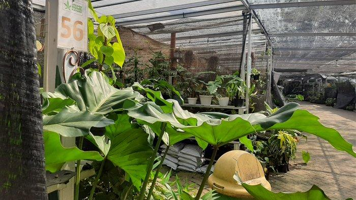 Pusat penjualan tanaman hias Minaqu Home Nature di kawasan BNR, Bogor Selatan, Kota Bogor.